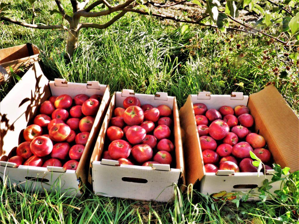 Veganic Peaches